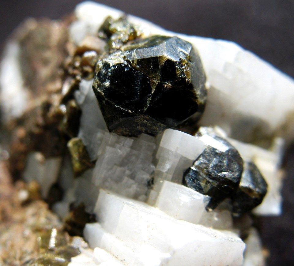 Andradrite Garnets on white Calcite. Photo is a closeup of a 1 inch area.jpg